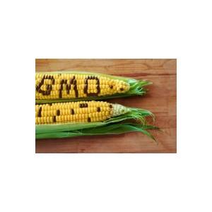 Более 2,5 тыс. проб на ГМИ в семенах проведено на юге РФ за пять лет