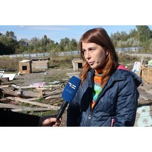 Активисты ОНФ разработают типовую схему проверки контрактов на содержание бездомных животных