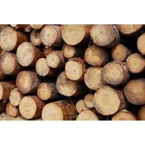 О вывозе лесоматериалов из Томской области за июнь 2014 года