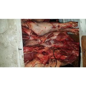 Смоленские таможенники задержали мясо неизвестного происхождения
