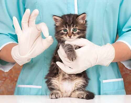 Артропластика, ламинэктомия, остеосинтез для животных