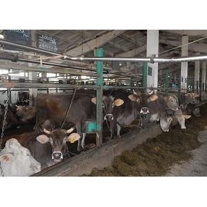 Костромской филиал РСХБ предоставил аграриям свыше 400 млн рублей