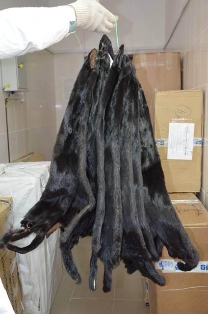 Оренбургская таможня, контрабанда меха, шкурки норки