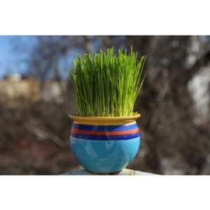 Дом дружбы народов Чувашии приглашает на межнациональный праздник «Навруз»