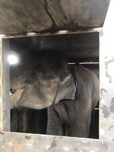 Major Cargo Service перевезла трех слонов из Мьянмы в Россию