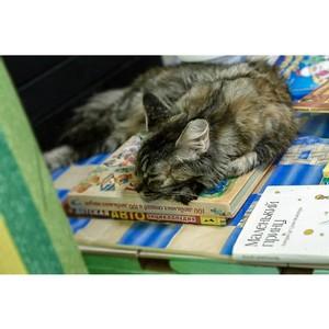 Книги, кошки и цирковые номера. Тюменские общественники провели первый книжный своп