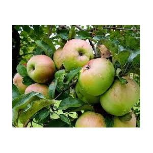 К 2024 году производство плодов и ягод вырастет на 41%