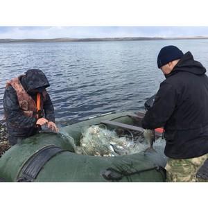 Активисты ОНФ в Туве освободили озеро Чагытай от сетей браконьеров