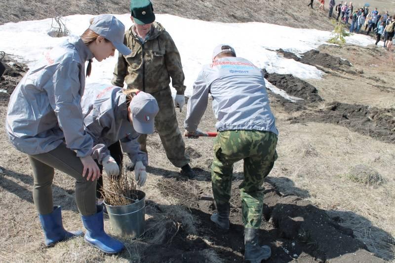 В ходе акции «Посади лес» было высажено 10 тысяч саженцев лиственницы