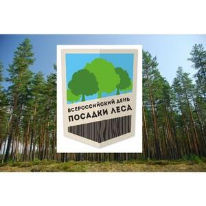 «Балтика»-Новосибирск участник акции «Всероссийский день посадки леса»