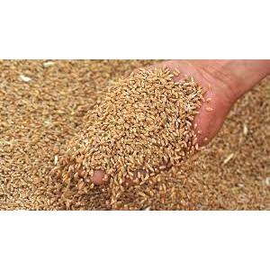 Правительство Эфиопии объявило новый тендер по закупке 600 тыс. тонн пшеницы