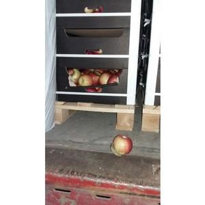 Смоленские таможенники задержали фуру, перевозившую 20 тонн яблок под видом теплоизоляционных плит