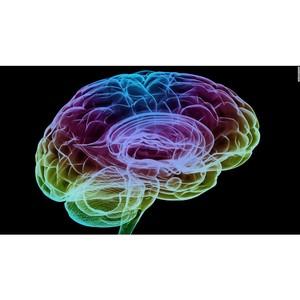 Получение новой информации активировало систему вознаграждения мозга