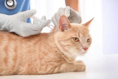 Где лучше сделать вакцинацию животных в Ростове