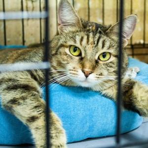 Газета «Столичный курьер» будет помогать животным в московских приютах