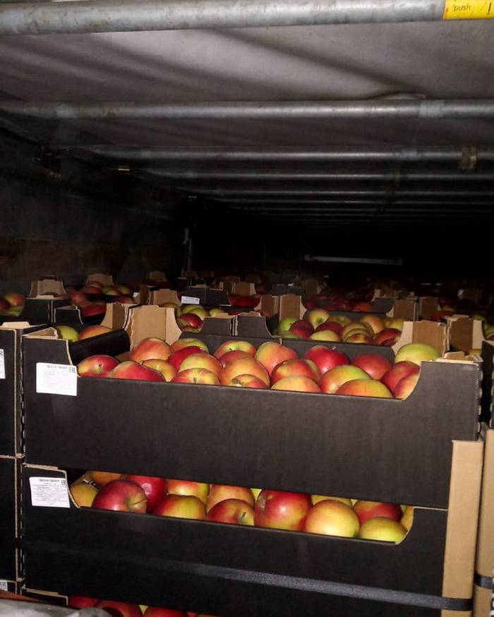 Яблоки вместо сушек и утеплителя