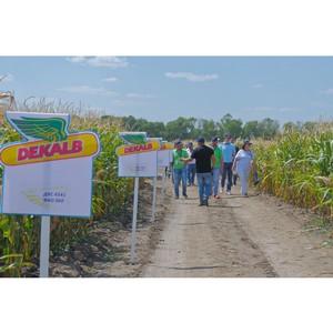 Огонь, вода и медные трубы: как новые гибриды кукурузы проходят испытания в условиях сезона-2019
