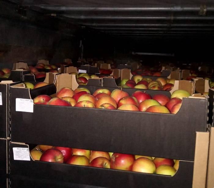 Смоленские таможенники задержали партию зелени и свежих   яблок без сопроводительных документов