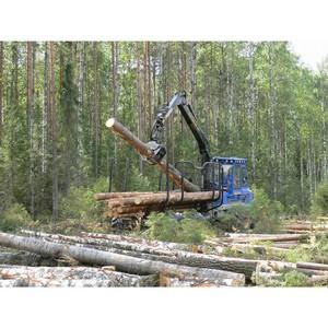 В Кировской области проходят проверки пунктов переработки древесины