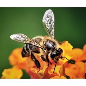 Резидент кластера Глонасс готов внедрить решение по защите пчёл