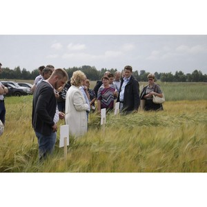 Аграрии Ярославской области обсудили выращивание пивоваренного ячменя в зоне Нечерноземья