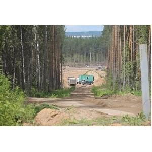 ОНФ в Коми обратился к властям для проверки законности вырубки леса и разработки песчаного карьера