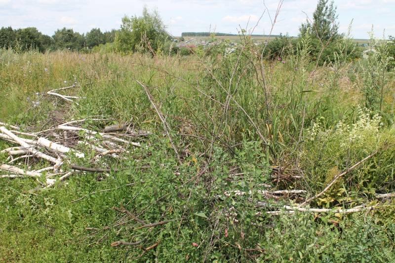 ОНФ в Мордовии добивается уборки навалов древесины с арендованной фермером земли