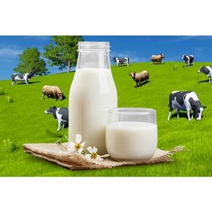 ДРуг-ДОктор. Испанские учёные выявили четыре полезных свойства молока