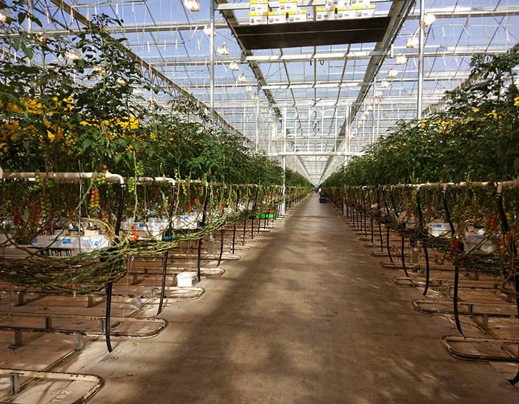 «Умный свет»  для «умных» теплиц и аграрного сектора экономики