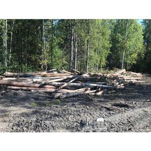 ОНФ в Карелии призвал лесозаготовителей соблюдать правила пожарной безопасности