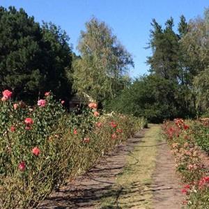 Дети-пациенты Ставропольской психбольницы посетили ботанический сад