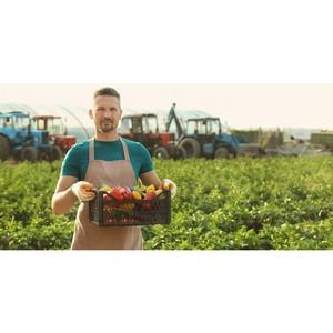 Россельхозбанк выдал первые льготные кредиты фермерам – членам АККОР