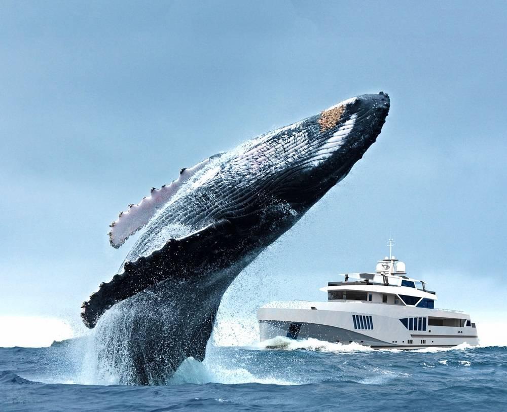 Почему появился спрос на экспедиционные яхты?