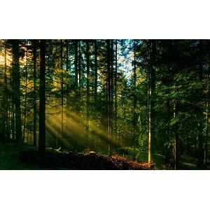 Помогите спасти заповедный Масловский лес!