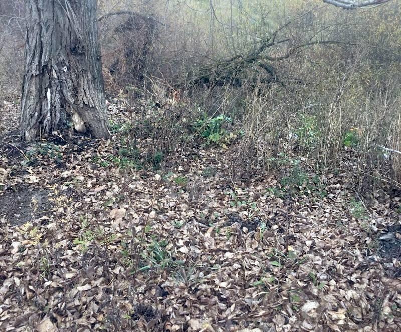 В Чамзинском районе Мордовии убрали свалки на берегах реки Нуя