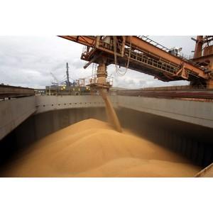 Экспорт зерна серьезно увеличил убытки селян