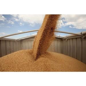 План-минимум для «Зерна Сибири» – экспорт 850 тыс. тонн зерна
