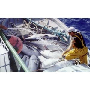 ЕС и Сейшельские Острова: переговоры по соглашению о рыболовстве