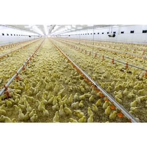 Итоги работы отрасли животноводства Татарстана за 9 месяцев 2019 года