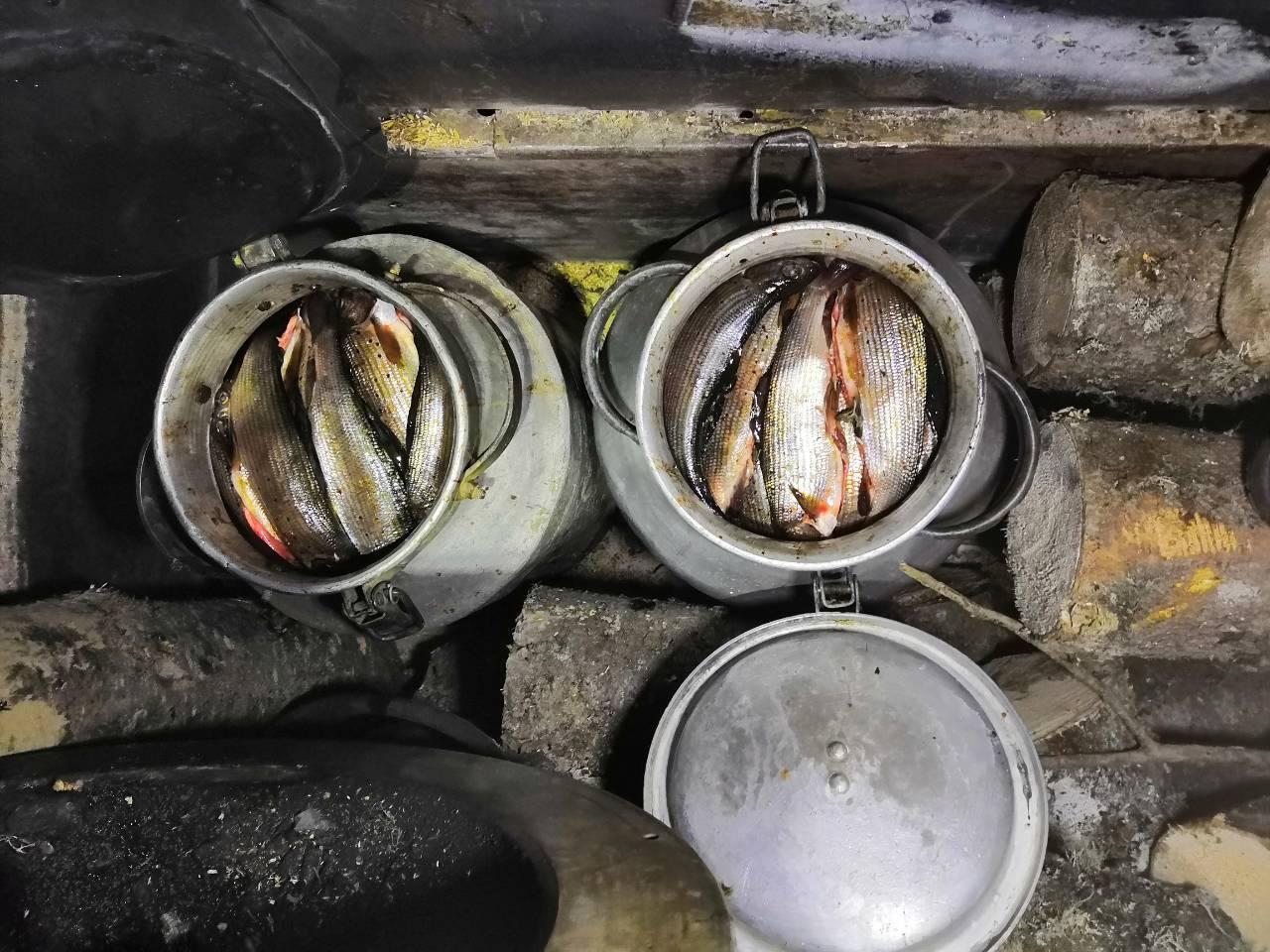 При содействии росгвардейцев выявлена незаконная траспортировка рыбы