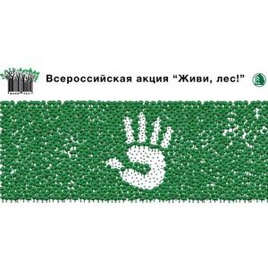 Акция «Живи, лес!» стартует в Поморье