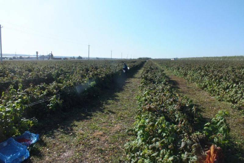 Экологическое растениеводство и земледелие в Тамбовской области