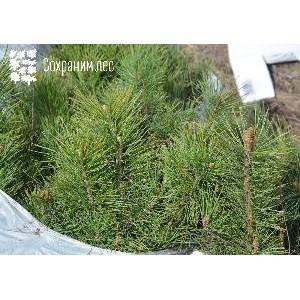 Итоги Всероссийской лесовосстановительной акции «Сохраним лес»