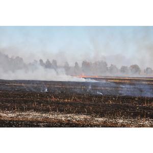 P&G и WWF России защитят алтайские леса от пожаров