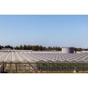 ФСК обеспечила передачу до 84 МВт тепличному комплексу «Ботаника»
