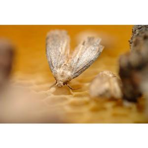 Пчеловоды вносят вклад в решение одной из главных проблем экологии
