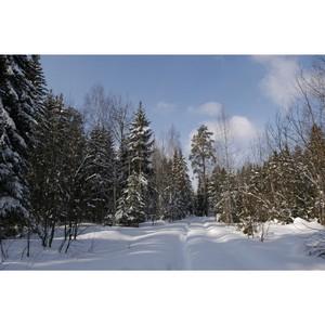 Кировские специалисты лесного хозяйства отмечены грамотами Рослесхоза