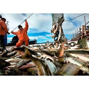 Камчатка — лидер по инвестициям в рыбное хозяйство