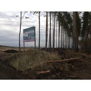 Благодаря ОНФ вырубка Малышевского леса Воронежа остановлена