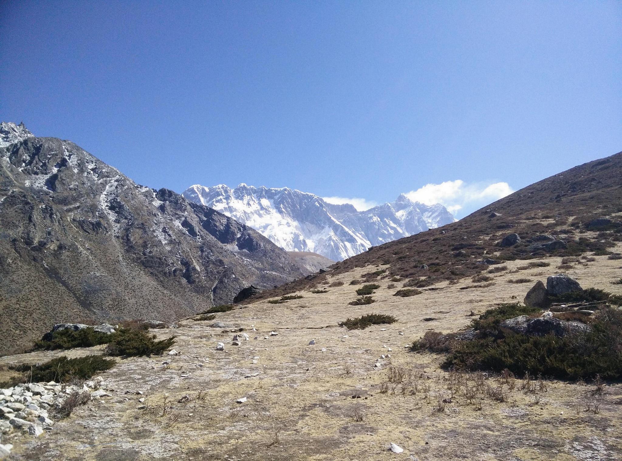 Вид на хребет Нупцзе-Лхоцзе снизу Ама-Даблам на высоте 4900 м с типичной субнивальной растительностью. Предоставлено: Карен Андерсон.